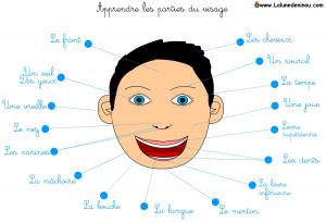 les_parties_du_visage_a_imprimer